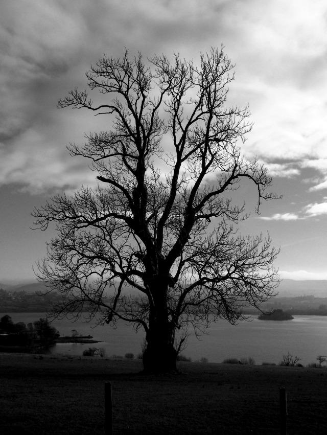 Lough Eske Ash in Winter