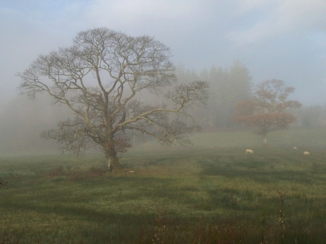 Tree in Morning Mist