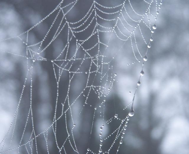cobweb on bird feeder