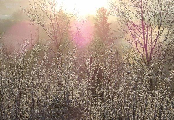 frosty garden.jpg